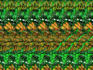 butterfly stereogram