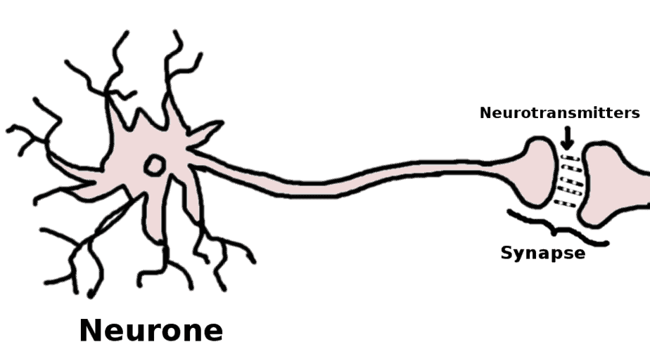 Healthy neurone