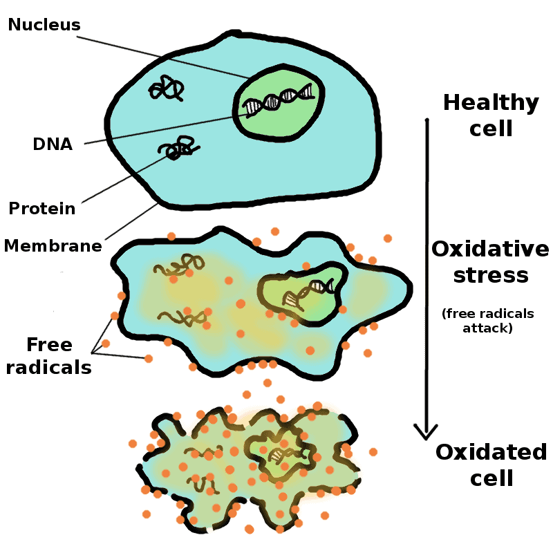 oxidation of a cell