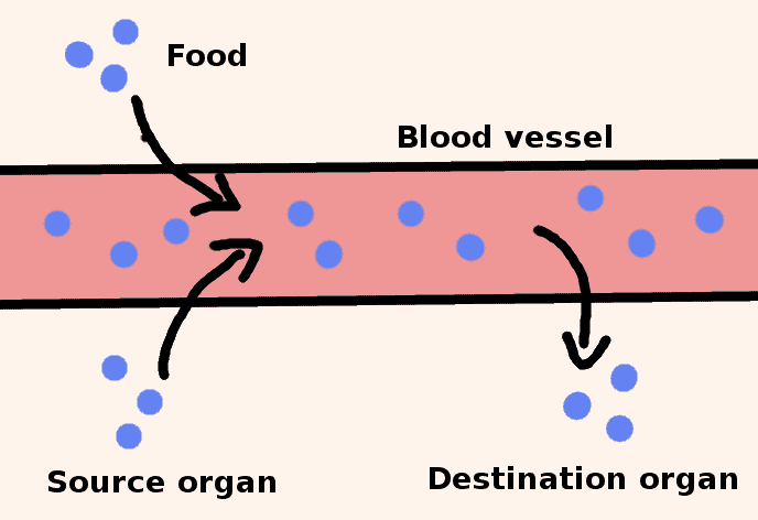 minerals of a blood vessel in deficiency - schema