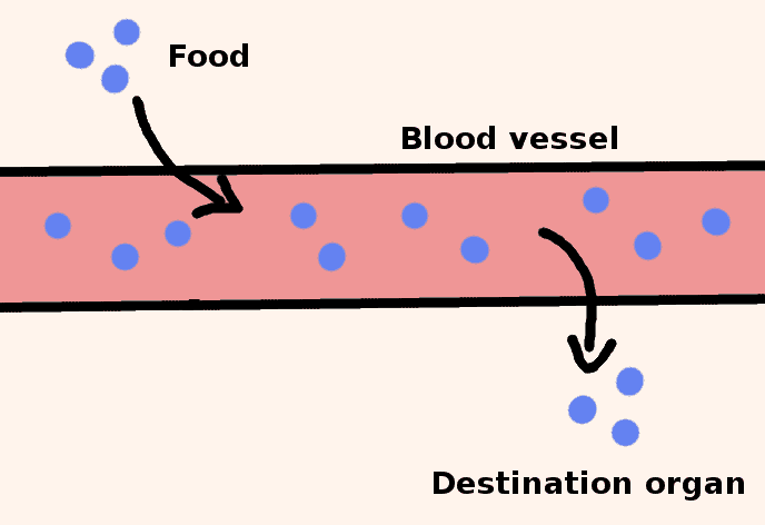 minerals of a blood vessel - diagram